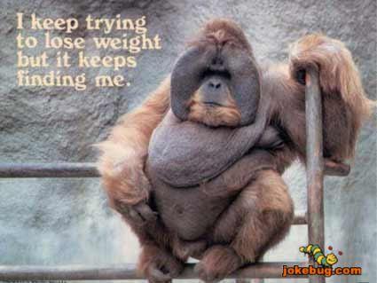 Funny Fat Monkeys Funny Fat Monkeys 425 x